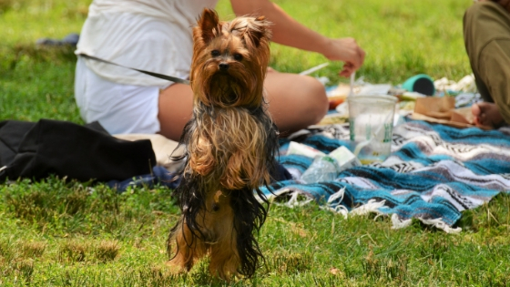 a picnic is a great way to pamper your pet