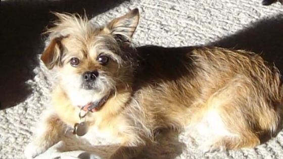 such a cute old dog named Dexter loved by Rachel Webber