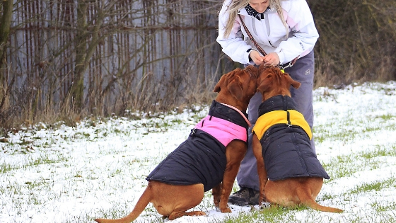 Exercising your senior dog in cold weather