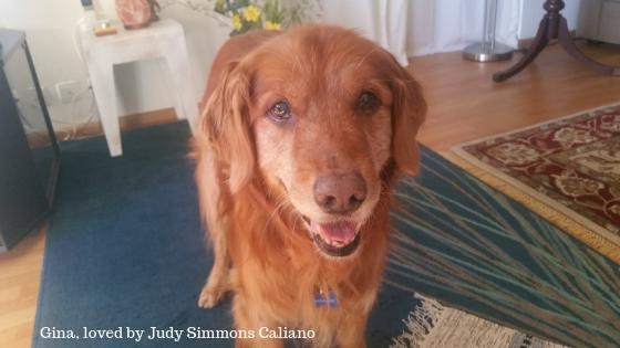 Gina loved by Judy Simmons Caliano
