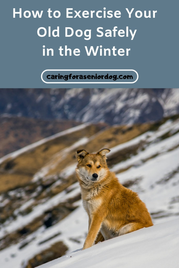 How to exercise your senior dog safely in the winter