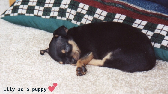Lily as a puppy Michele Johnson