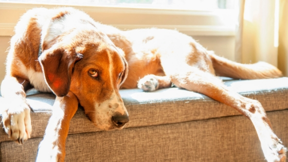 14 great ways to exercise your old dog indoors