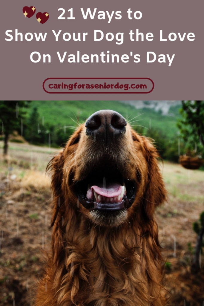 21 Ways to show your dog the love on Valentines Day