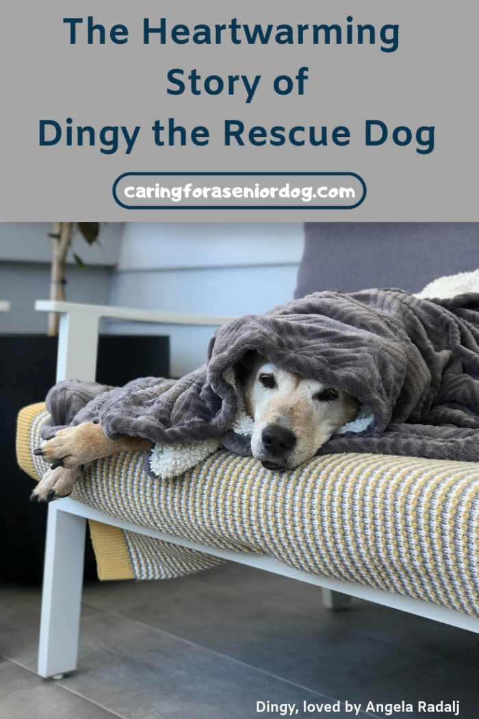 The heartwarming story of Dingy the rescue dog