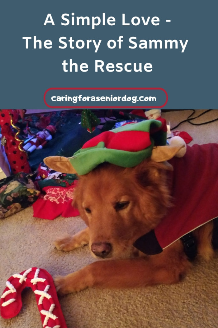 A Simple Love the Story of Sammy the Rescue