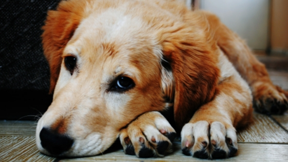 How to help a grieving dog