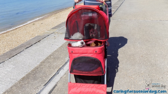 Top 7 products for dogs that have trouble walking