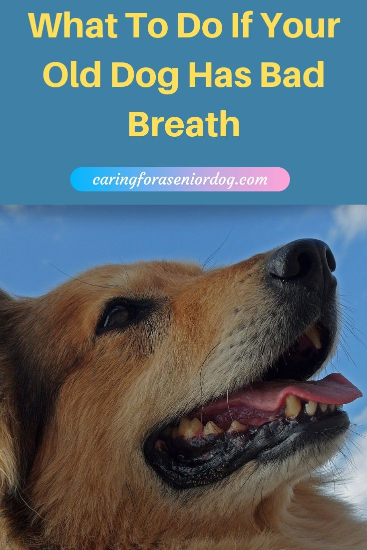 What to do if your old dog has bad breath