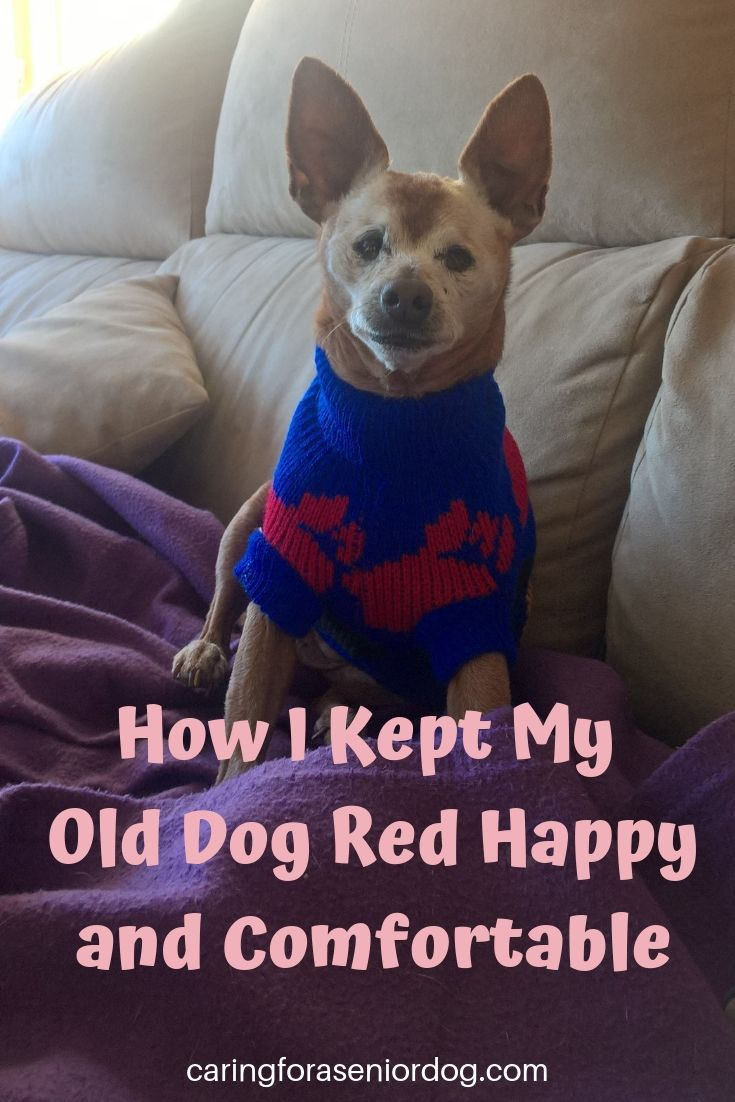 How I Kept my Old Dog Red Happy and Comfortable