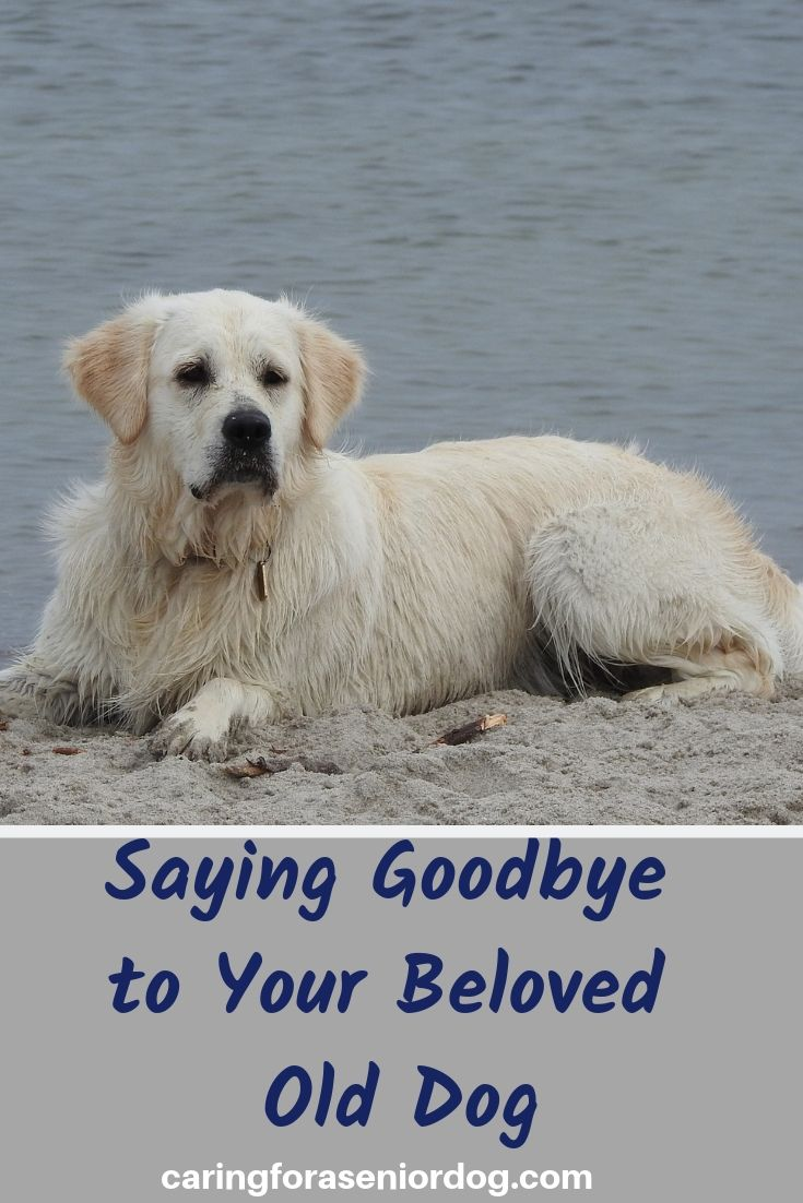 Saying Goodbye to Your Beloved Old Dog