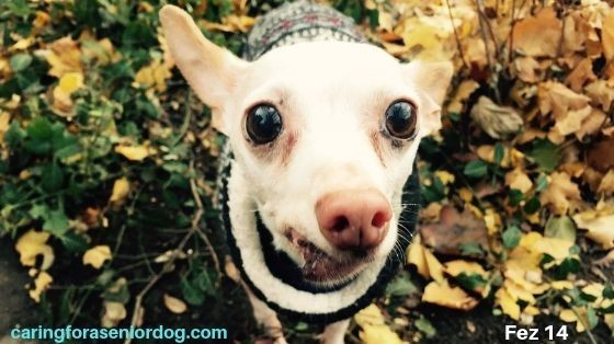 What to feed an old dog with no teeth