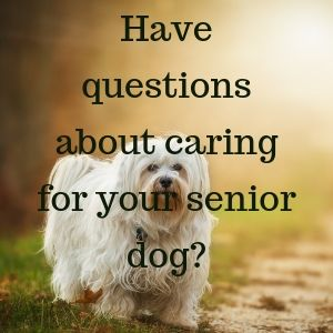 one on one senior dog care support service