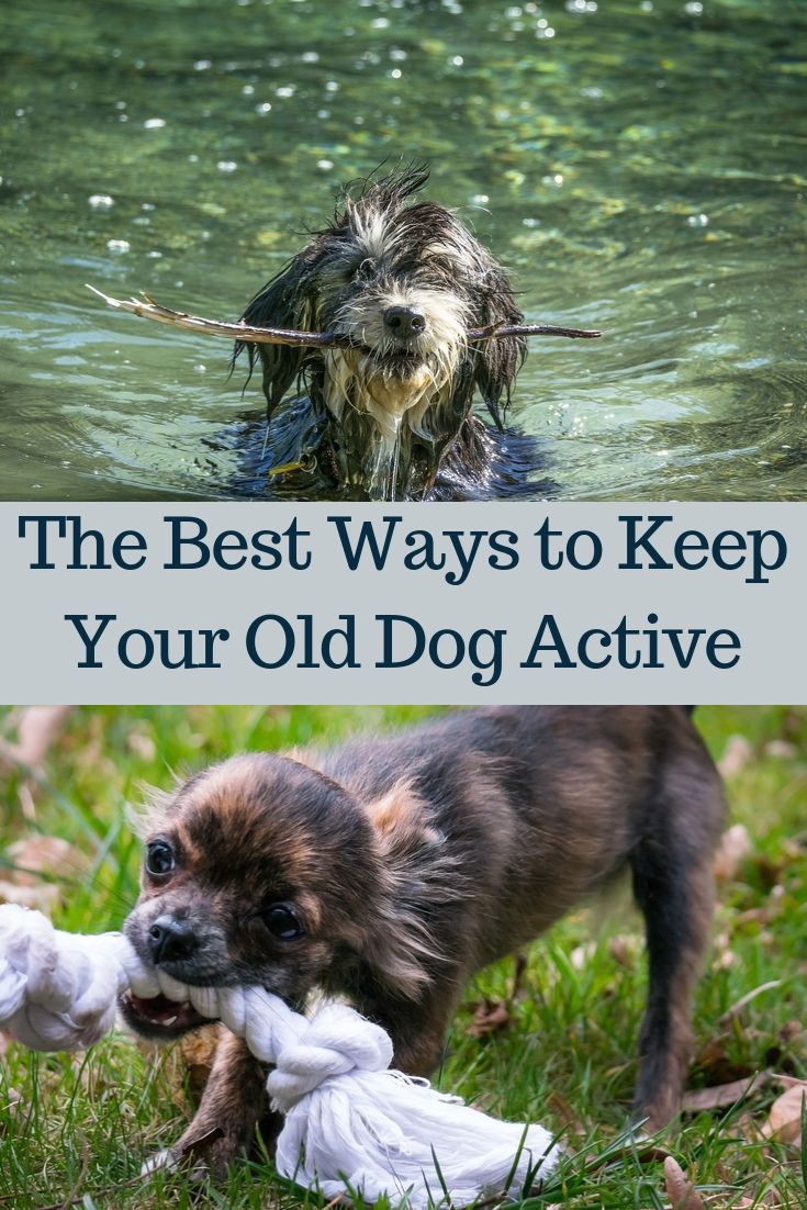 The Best Ways to Keep Your Old Dog Active