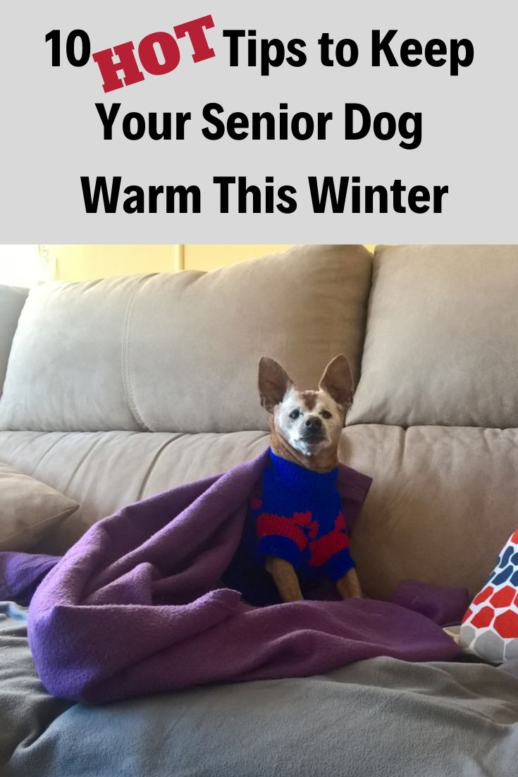 10 hot tips to keep your senior dog warm this winter