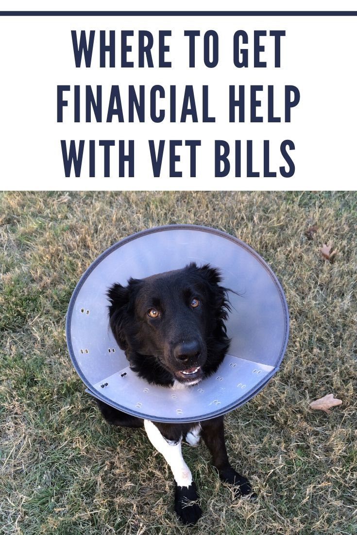 Where to get financial help with vet bills