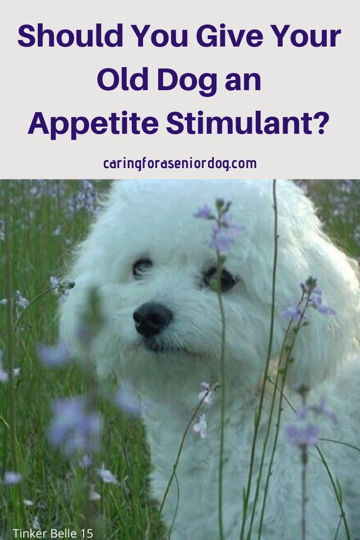 What you need to know about appetite stimulants for dogs