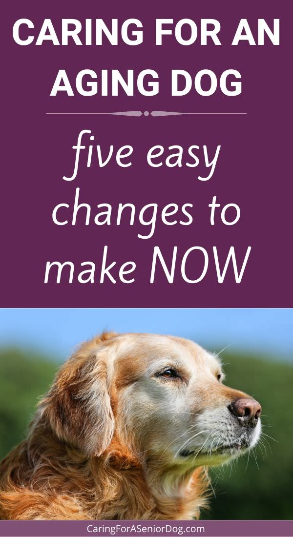 5 Easy Things You Can Do to Help Your Senior Dog Live Happier and Longer