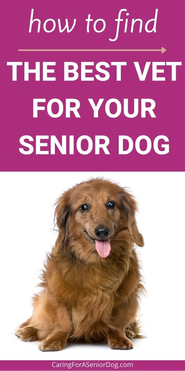 How to find the best vet for your senior dog - What to ask and where to look